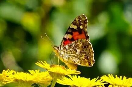 蚕蛹破茧成蝶的说说