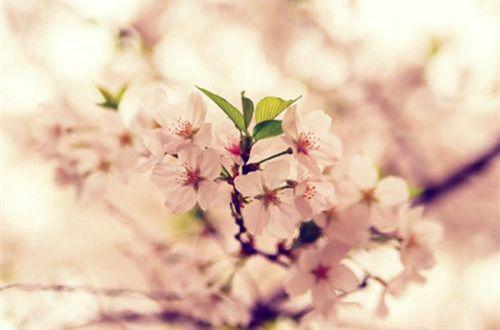 恋爱中的甜蜜心情说说带图片 遇