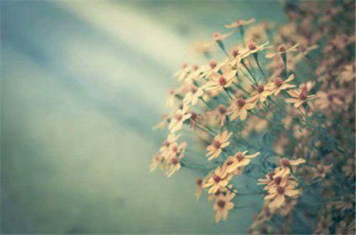 关于爱情的图片带字 一句话关于爱情的说说图片