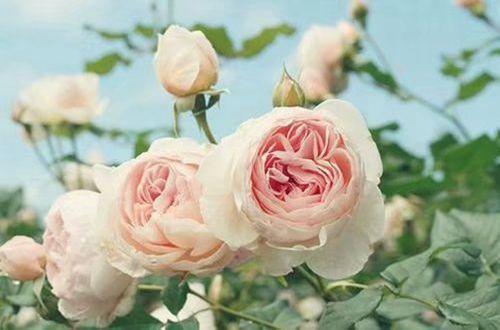 幸福瞬间的唯美说说 幸福就在一瞬间的说说